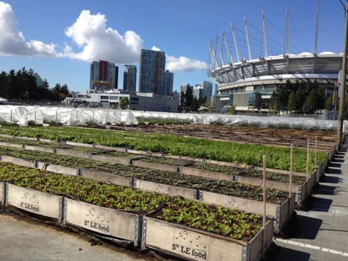 Vancouver urban farm agricoltura urbana for Eastside urban farm and garden