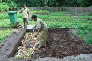 Vege garden bed 1  231110 014